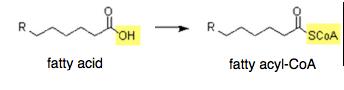 Fatty Acid to Fatty Acyl-CoA