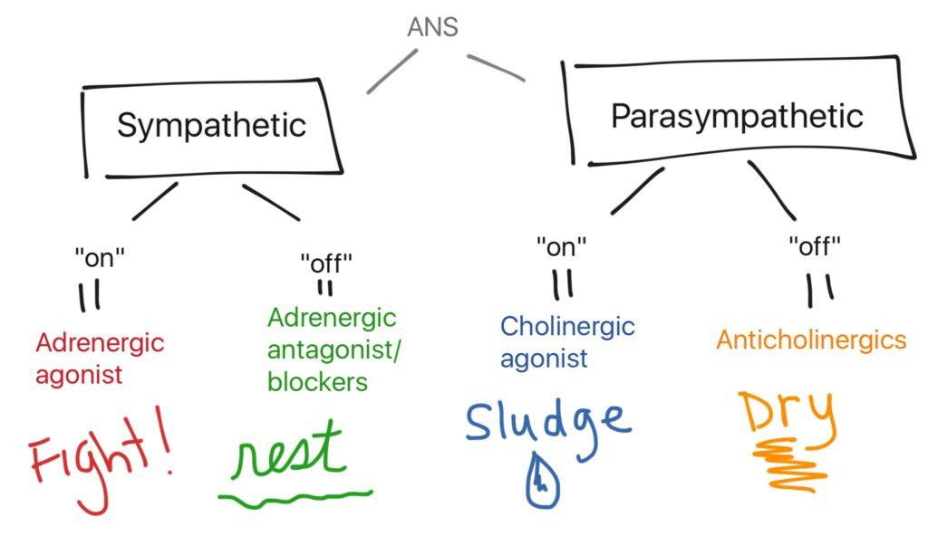 adrenergic cholinergic flow chart: fight, rest, sludge, dry
